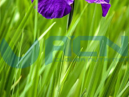Acorus calamus & Artemisia argyi-Do you want to know Fantastic plants about The Duanwu Festival?