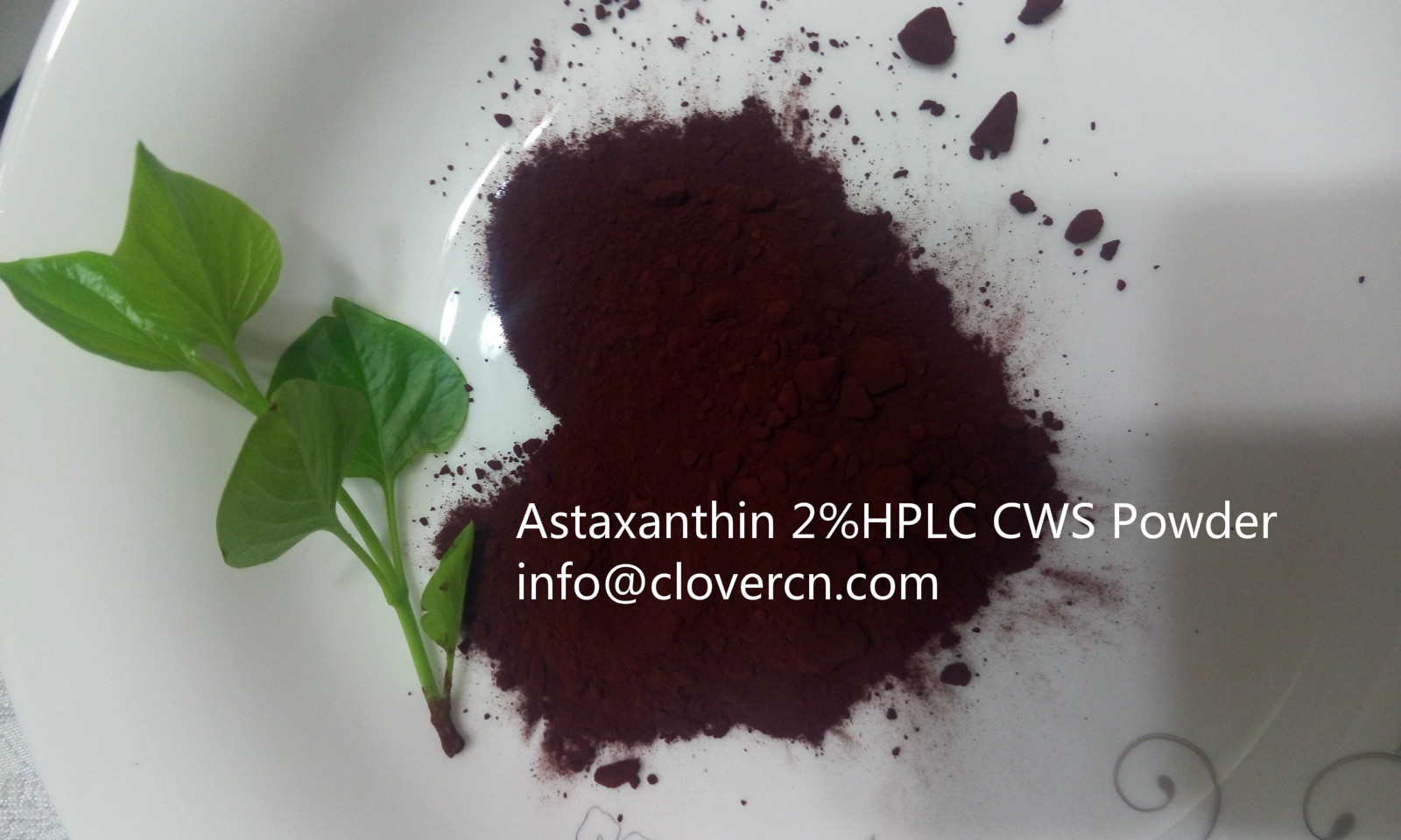 Buy Astaxanthin  A Clover Nutrition Inc Astaxanthin CWS Powder