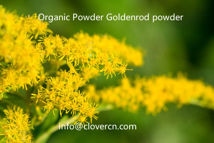 Organic Powder Goldenrod powder A Clover Nutrition Inc.jpg