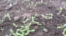 Marigold Flower Material Base