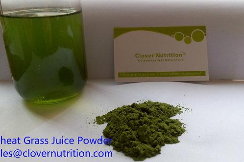 CNS00706 Wheatgrass Juice Powder-triticum aesrivum