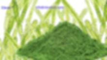 Chlorella Algae Extract