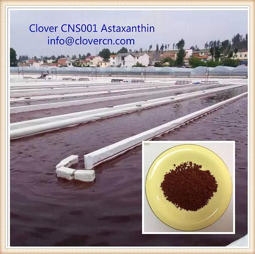 Astaxanthin 5% HPLC Manufacturer