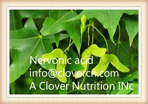 Acer truncatum Extract Nervonic Acid new nervonic acid