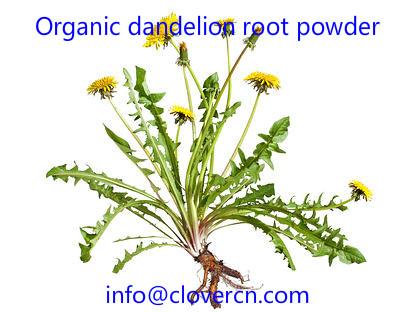 Organic dandelion root powder A Clover Nutrition Inc.jpg