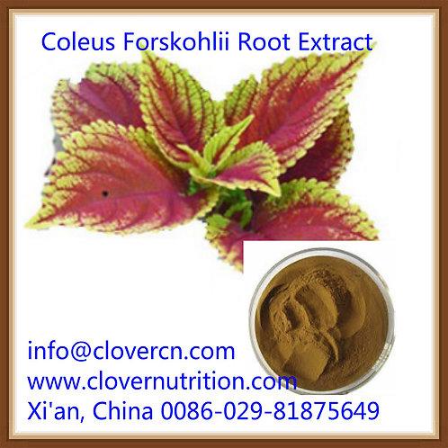 Coleus Foskohlii 10% HPLC  Forkohlii