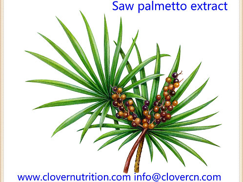 CNS0147 Saw palmetto extract 10:1