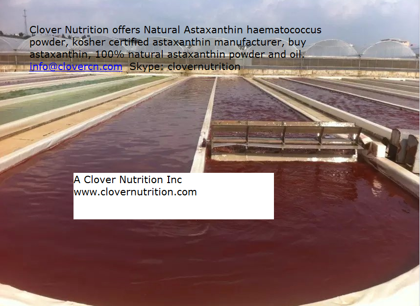 Buy Astaxanthin Haematococcus Pluvialis Powder