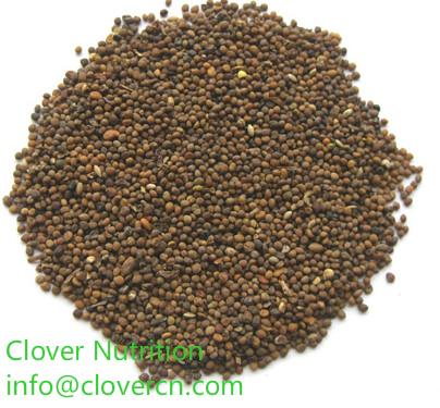 Semen cuscutae Seed Powder