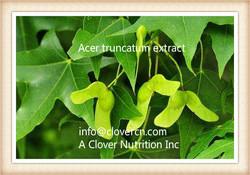 Acer truncatum extract