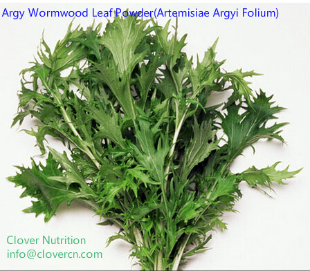 Argy Wormwood