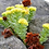 Thumbnail: CNS00140 Rhodiola rosea Extract 1%HPLC Salidroside
