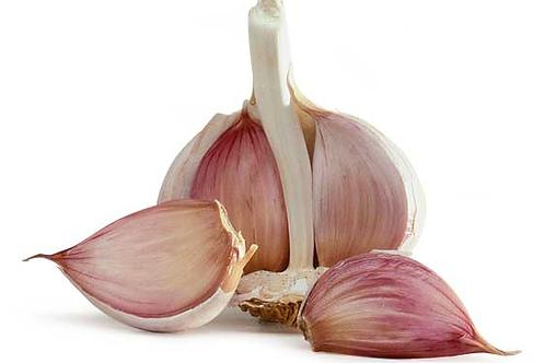 CNS0011 Allicin(Allium sativum L) 10:1 TLC