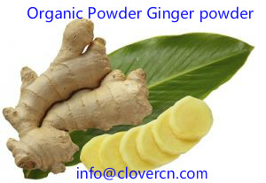 Organic Powder Ginger powder A Clover Nutrition Inc.jpg