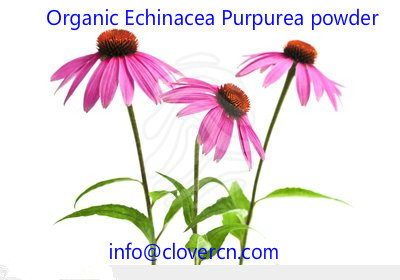 Organic Echinacea Purpurea powder A Clover Nutrition Inc.jpg