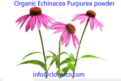Organic Echinacea Purpurea Powder