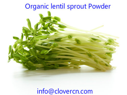 Organic Lentil Sprout Powder