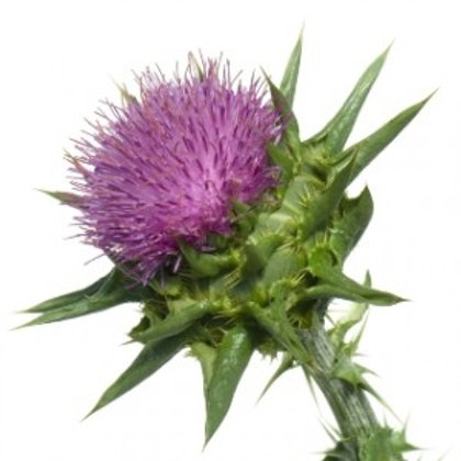 Organic Powder milk thistle powder