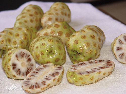CNS00527 Noni Fruit Extract 10:1 TLC