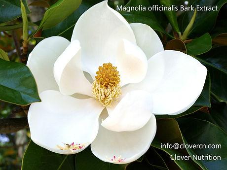 Magnolia Bark Extract(Houpu Extract)