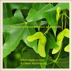 Truncatum Extract Nervonic acid benefits