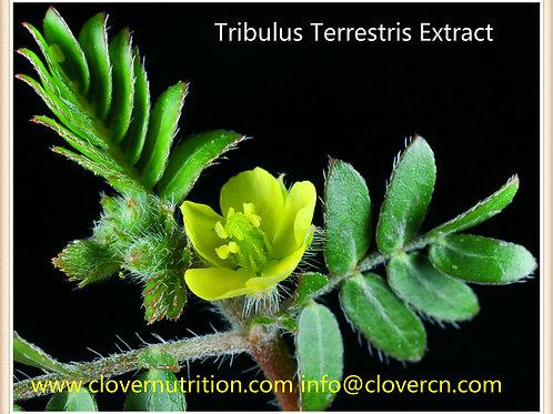 CNS0153 Tribulus Terrestris Extract Saponins 95%