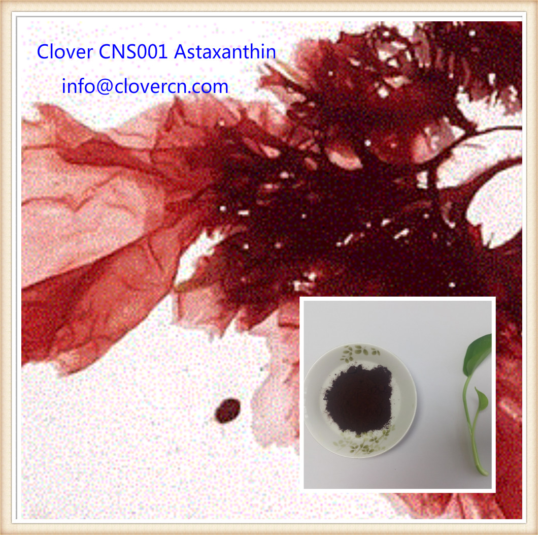 haematococcus pluvialis Buy Astaxanthin  Clover Nutrition CNS001 Haematoccoccus Pluvialis Powder