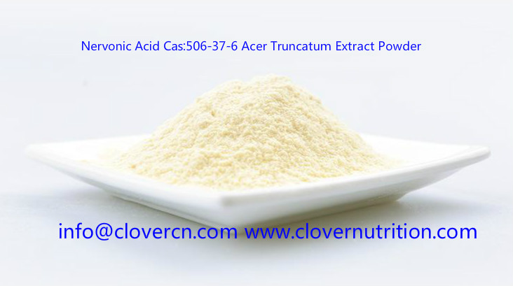 Nervonic Acid Cas 506-37-6 Acer Truncatum Extract Powder