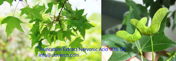 Acer truncatum Extract Nervonic Acid 90