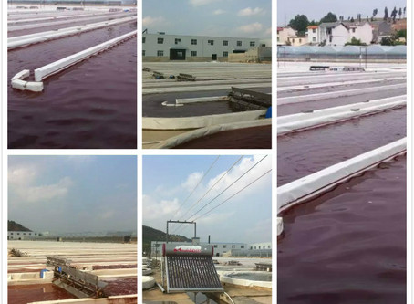 Astaxanthin-Haematococcus pluvialis/This is the ISO Supplier you looking for a long time