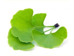 Truncatum Extract Nervonic Acid 90% GC| China | A Clover Nutrition Inc