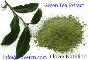 Green Tea Extract Polyphenols EGCG