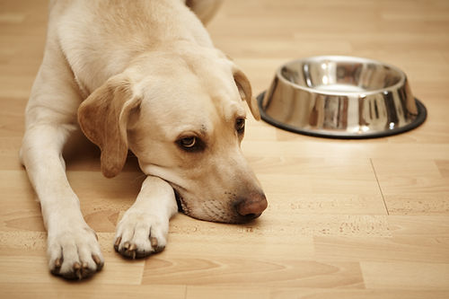 dog bowl.jpg