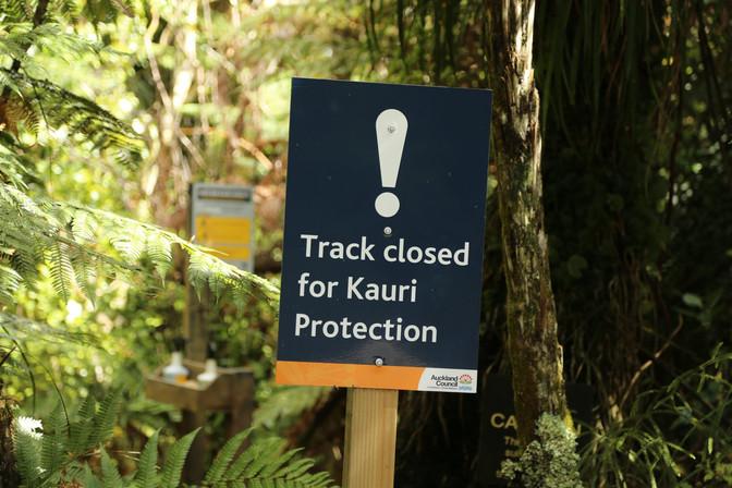 Kauri Dieback Update