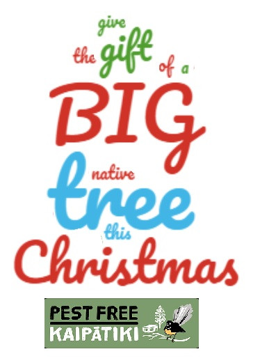 GIFT A BIG NATIVE TREE THIS CHRISTMAS
