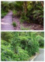 Restoration Plants.jpg