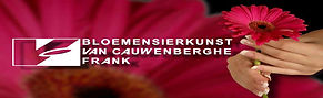 bloemen_van_cauwenberghe_gerbera.jpg