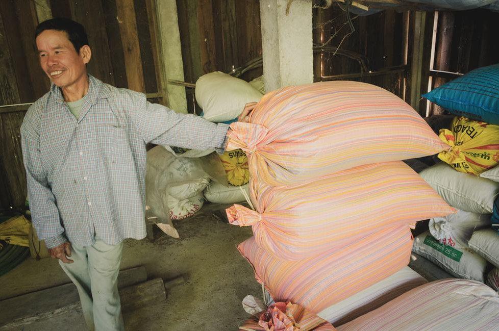 rice-seed-saving-thailand.jpg