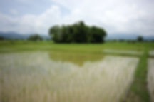 organic-black-rice.jpg