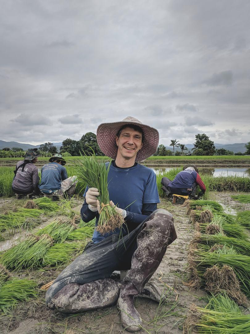 rebirth-rice-transplanting-seedlings.jpg