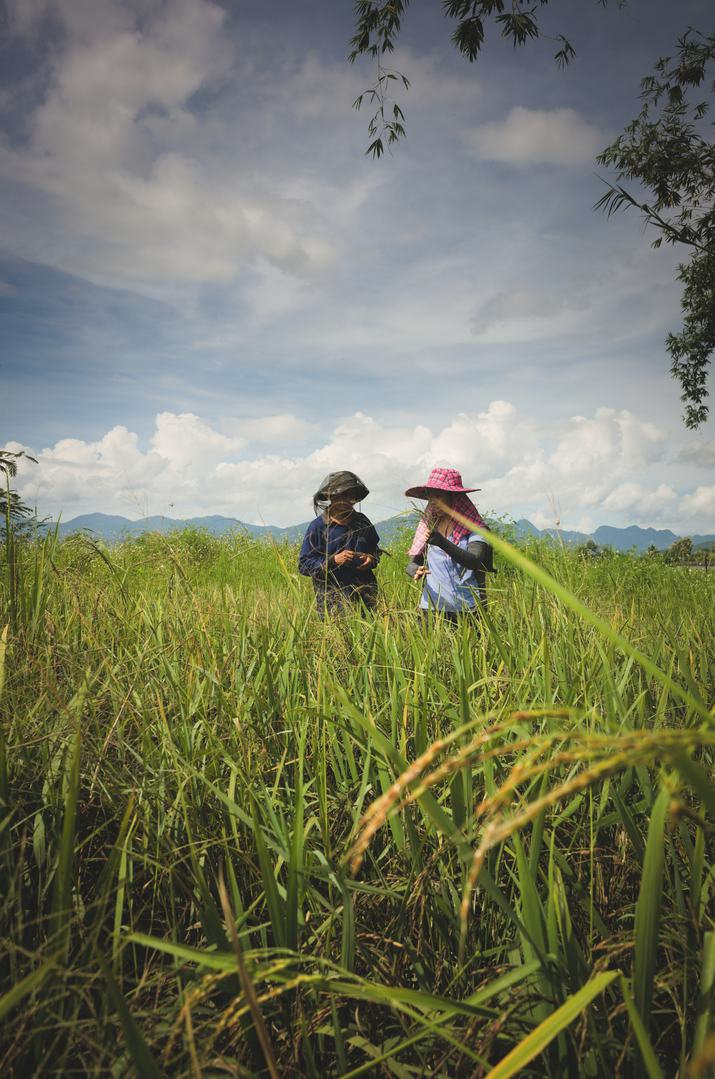 inspecting-rice-fields-chiang-mai.jpg