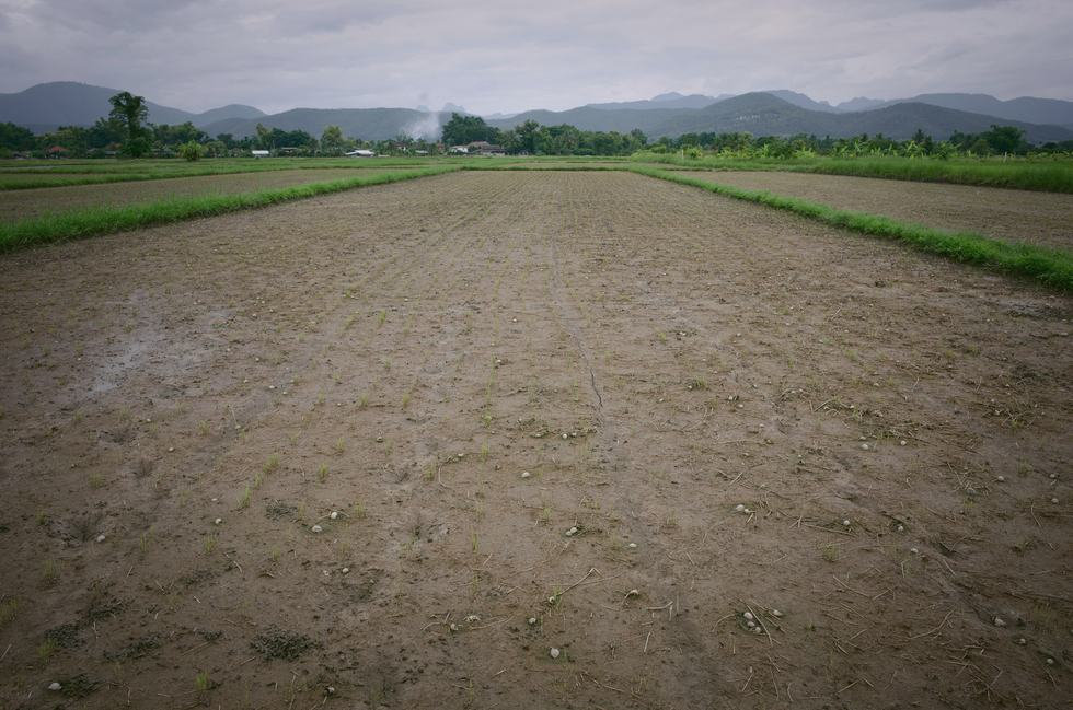 growing-rice-without-water.jpg