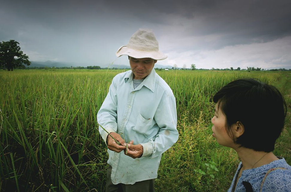 heirloom-black-rice-from-thailand.jpg