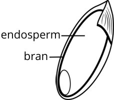 Rice anatomy-anthocyanin2.png