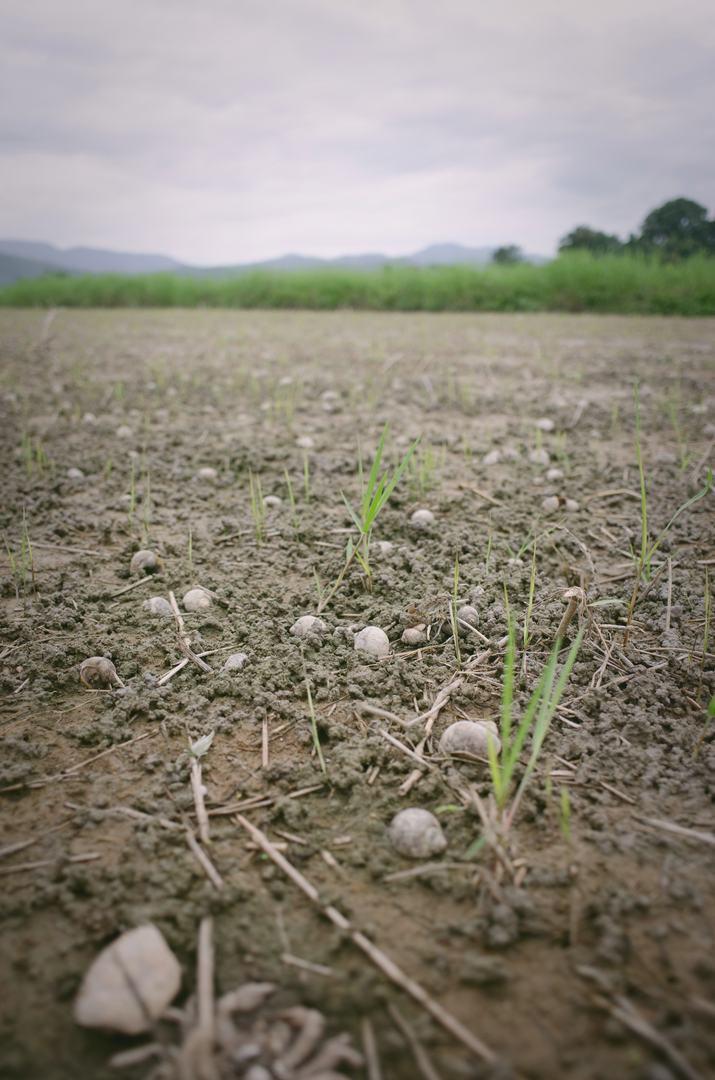 more-crop-per-drop.jpg
