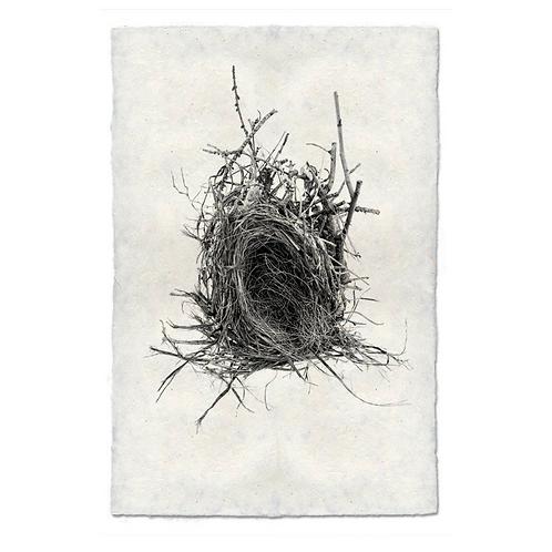 Nest Study #12