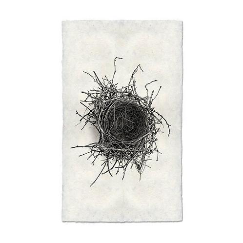 Nest Study #2