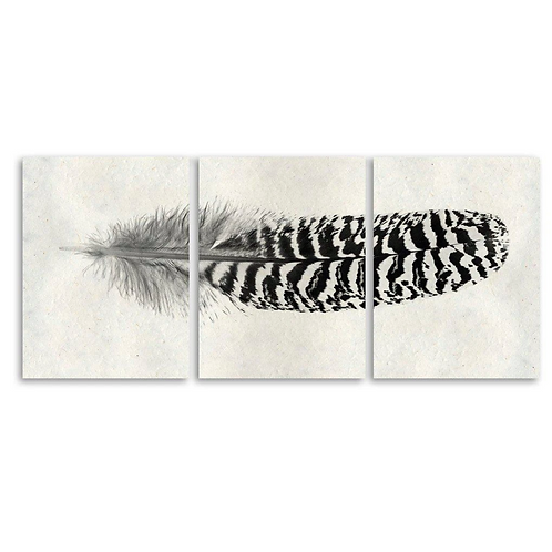 Feather Triptych -Quill Feather #13