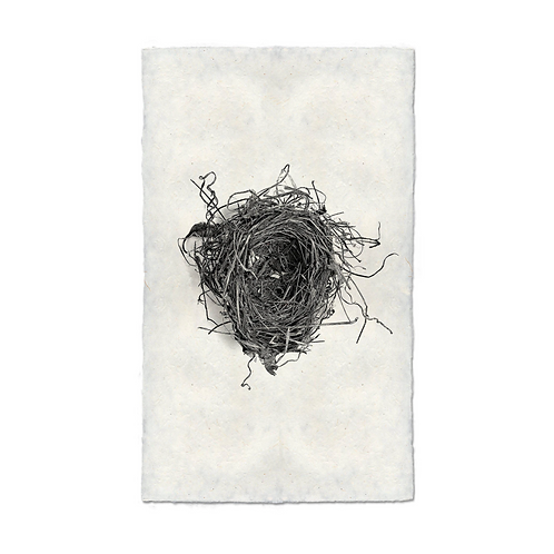Nest Study #5