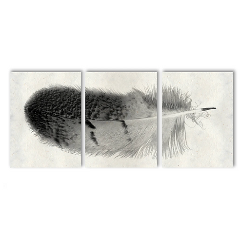 Feather Triptych - Owl Feather #7
